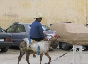 donkey & rider